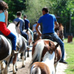 Balade à cheval dans l'Avesnois