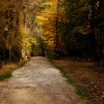 L'automne en Avesnois