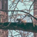 L'écureil dans le jardin de la maison Aubépine
